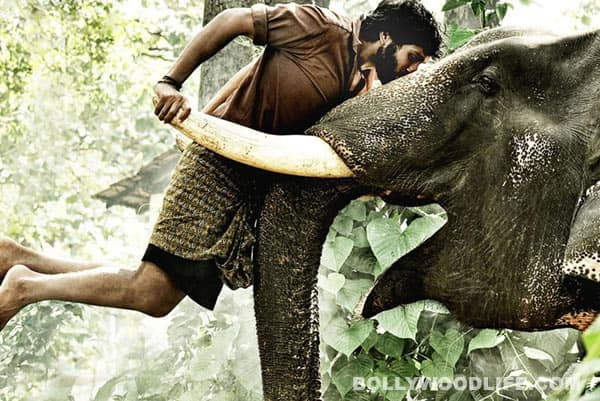 KUMKI movie review: A jumbo effort
