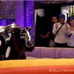 Bigg Boss 7: Meet the new member of the house!