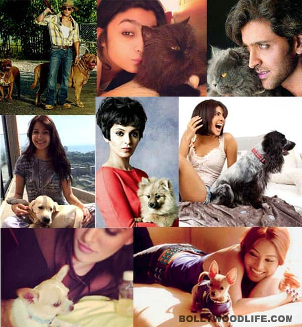 Teaser-Collage-Pets-200314
