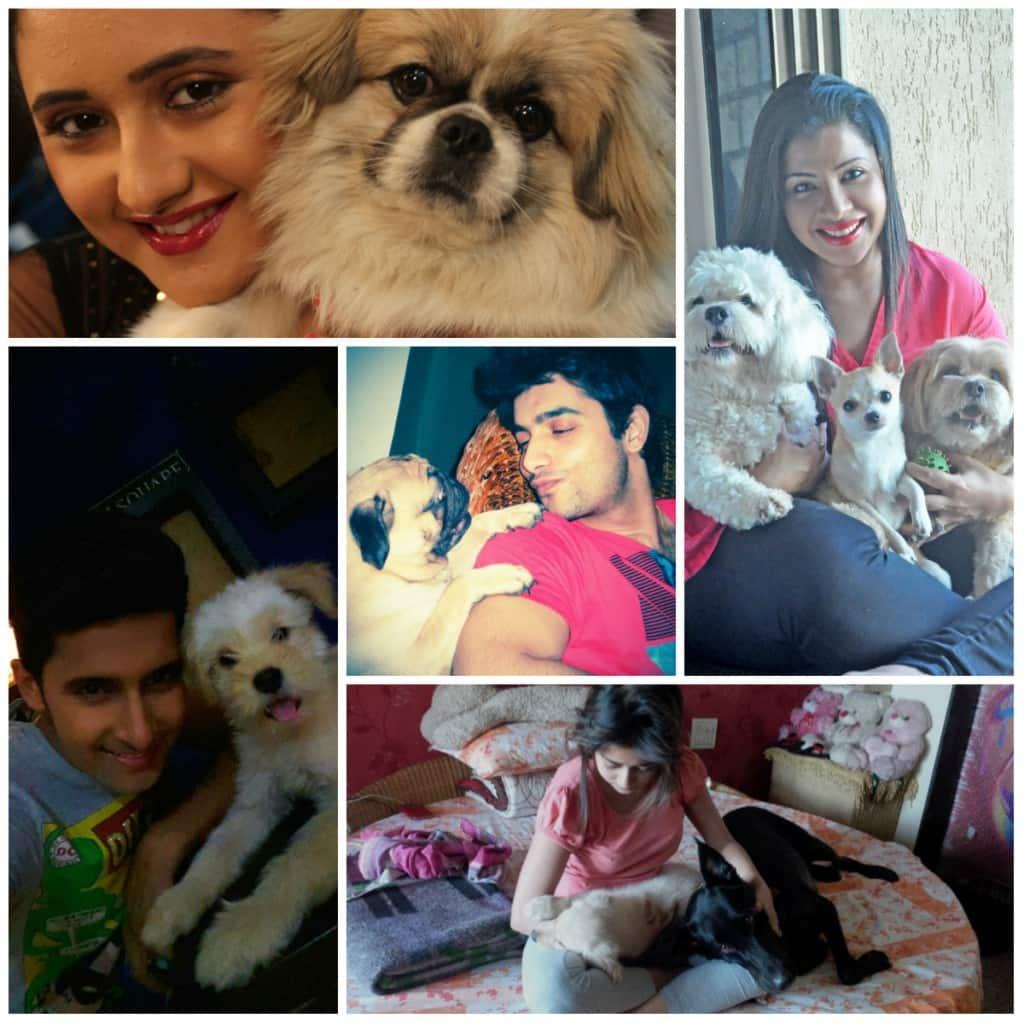 Rashami Desai, Ravi Dubey, Tina Dutta wish to have a pet friendly Diwali!