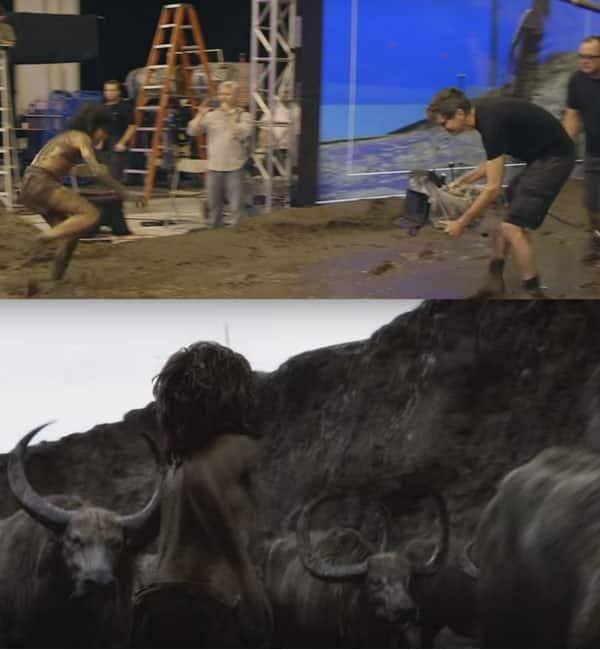 Mowgli-Bull-Fight