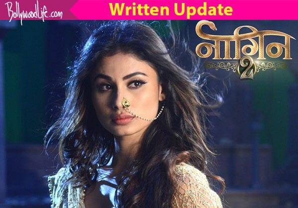 Naagin 2 10th December 2016 Full Episode, Written Update: Shivangi, Rudra plot to kill Akhilesh