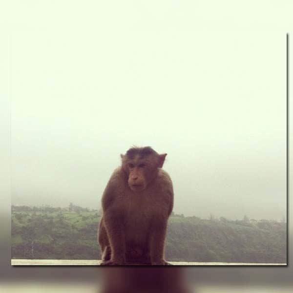 छत पर दिखा बंदर