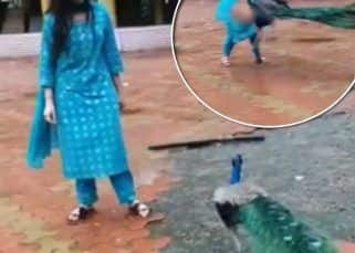 SCARY! Bigg Boss 9 contestant Digangana Suryavanshi attacked by a peacock – watch video