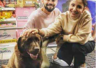 Virat Kohli, Anushka Sharma and their loved for dogs of all shapes and sizes — you won't see a more adorable video on the internet all week