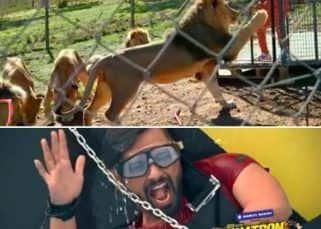 Khatron Ke Khiladi 11 Promo: शेरों से घिरे पिंजरे में बंद Rahul Vaidya ने गाया गाना, Rohit Shetty ने की बोलती बंद
