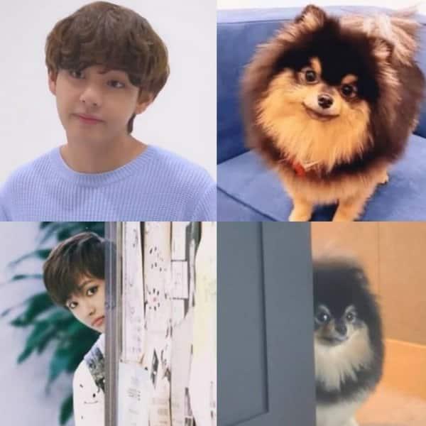 Peek-a-boo puppies