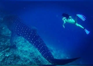 Jacqueline Fernandez swimming with shark in Maldives