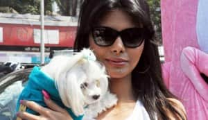 Sherlyn Chopra in PeTA's Dogs can't use condoms campaign